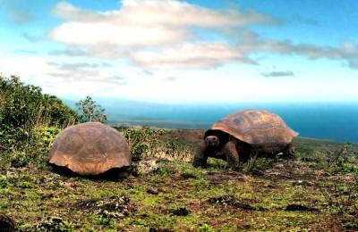 Κρουαζιέρα στα νησιά Galapagos